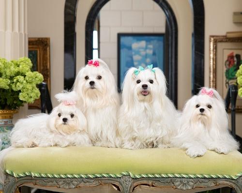 Dog Idols